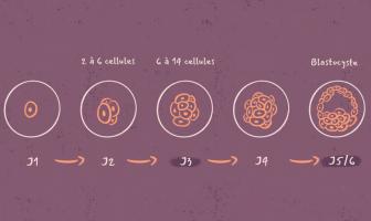 Meilleur résultat : Transfert d'embryon au Jour 3 ou au Jour 5 ?