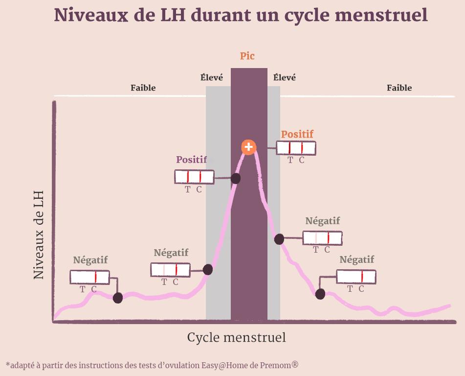 Niveaux de LH durant un cycle menstruel